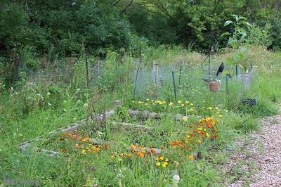 Arbor Lakes at Middleton - Community Garden